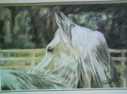 tableau animaux cheval arabe pastel : cheval arabe