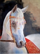 tableau animaux cheval pur sang equestre : pur sang arabe