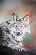 tableau animaux loup animal sauvage carnassier pastel loup : Le loup