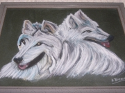 tableau animaux loups : Loups blancs