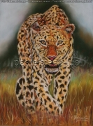 tableau animaux panthere chasse savane : panthere en chasse