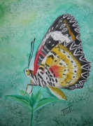 tableau animaux papillon collection aquarelle butterfly : Papillon Cethosia Cyane