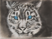 tableau animaux pastel tigre blanc animaux : 238 - Tigre blanc