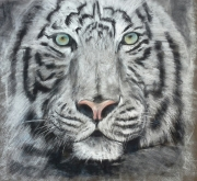 tableau animaux : Tigre blanc