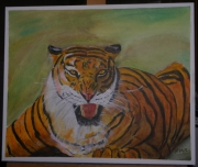 tableau animaux : tigre