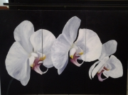 tableau fleurs trio orchidees blanches toile : trio d orchidees