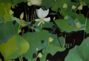 "tableau paysages nenuphars nature morte vert lotus : ""Daydreams"""