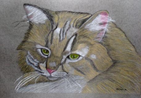 TABLEAU PEINTURE Animaux Pastel - La tête de chat