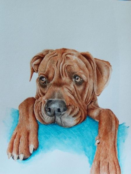 Populaire PEINTURE boxer chien aquarelle bébé - Bébé boxer IT32
