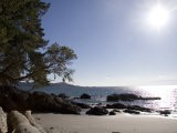 A View of a Beach in British Columbia - Taylor S. Kennedy