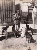 Turkish Man with a Basket on His Back Surrounded by Stray Dogs