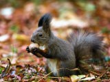 A Squirrel Handles a Nut Received from a Child in a Park in Bucharest, Romania November 6, 2006 - Vadim Ghirda