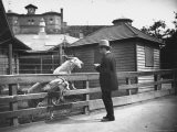 Man Feeding Goats Kept in Captivity in the Central Park Zoo - Wallace G. Levison
