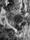 Close Up of Girl Collecting Eggs from Nest - Wallace Kirkland