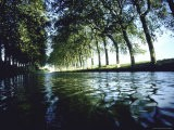 Elm Trees Line Languedoe Canal, Trebes, Southern France East of Toulouse - Walter Sanders