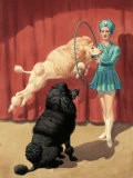 French Poodle Jumps Through a Hoop During a Circus Performance - Walter Weber