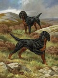 Gordon Setters, Native to the Scottish Moors, are a Rugged Breed - Walter Weber