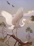 Great White Heron, White Morph of Great Blue Heron, Spreads its Wings - Walter Weber