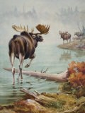 Painting of an Alaskan Bull Moose Challenging a Rival - Walter Weber