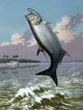 Tarpon Caught on Hook Leaps Out of Water, Fishing Boat Floats Nearby - Walter Weber
