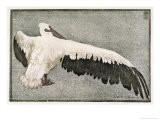 Pelican with Outspread Wings - Walther Klemm