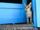 Kitten Standing in Doorway, Apia, Samoa - Will Salter