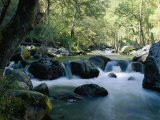 Woodland View of a Small Creek Flowing over Boulders