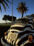 Back of a Beetle Car Painted in Zebra Stripes, Cape Town, South Africa, Africa - Yadid Levy