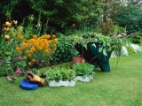Trays of Petunia and Nicotiana Next to a Wheel Barrow Full of Weeds Gloves and a Kneeler Iris - Zara Mccalmont (napier)