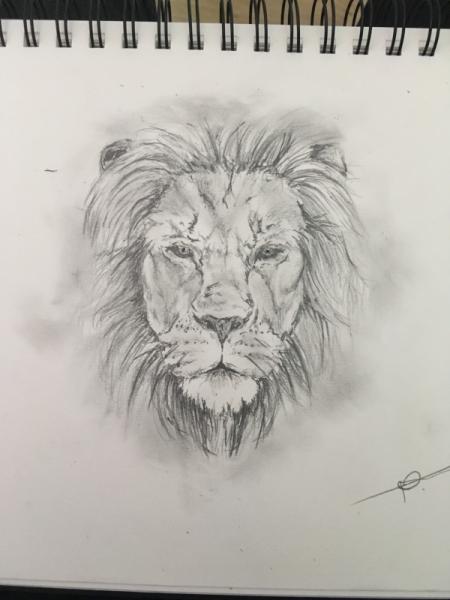Dessin Animaux Animal Lion Roi Lion