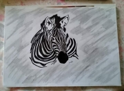dessin animaux animal zebre savane : Illustration zèbre