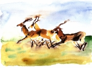 dessin animaux antilopes savane course sauvage : antilopes