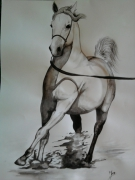 dessin animaux chevaux equitation pur sang arabe cheval : pur sang arabe