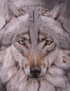 dessin animaux isere le versoud loup : Loup