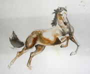 dessin animaux mouvelent animal aquarelle cheval : l'élan