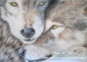dessin animaux wolves loups coloured pencils animal : Loups