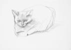 Dessin - Chat
