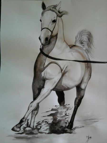 DESSIN chevaux equitation pur sang arabe cheval Animaux Aquarelle  - pur sang arabe