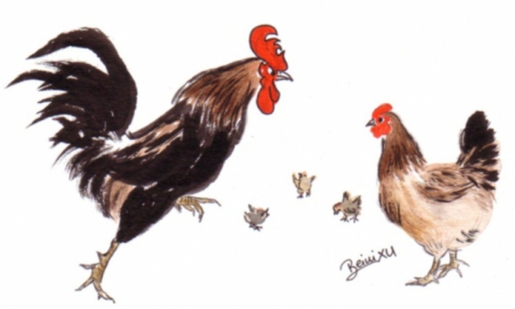 Dessin Coq Poule Poussin Aquarelle Animaux Peinture Chinoise Coq