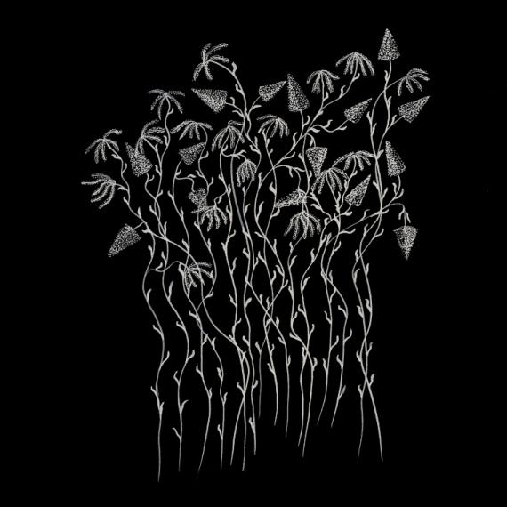 Dessin Fleurs Encre De Chine Noir Et Blanc Fleurs Fond Noir 2