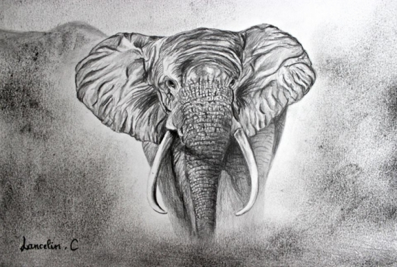 Dessin Fusain Elephant Crayon Dessin Elephant