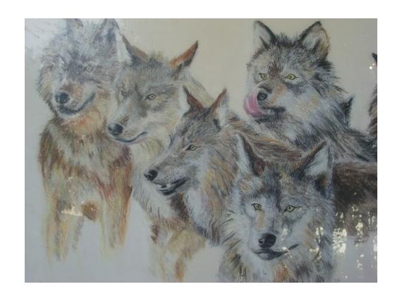 Dessin Les Loups Les Loups