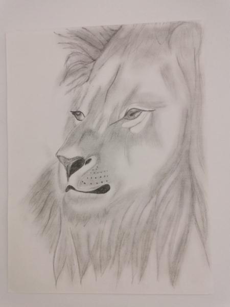 Dessin Lion Animaux Fusain Realiste Lion
