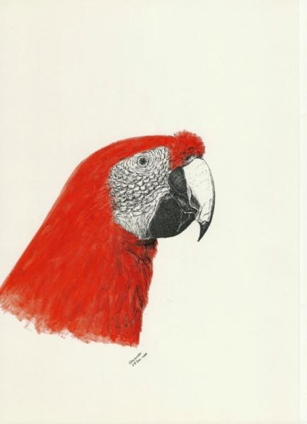 Dessin Perroquet Perroquet