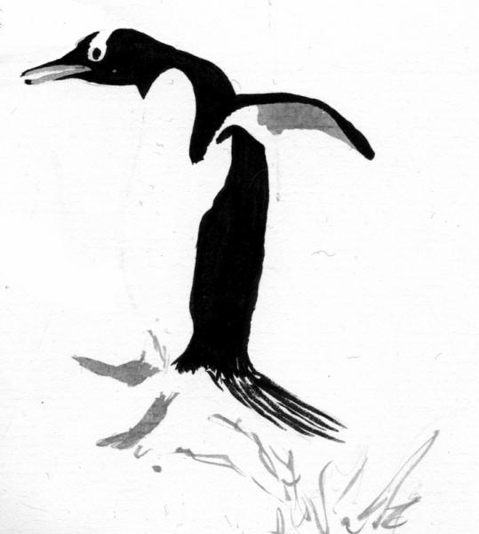 Dessin Pingouin Banquise Saute Oiseau Pingouin