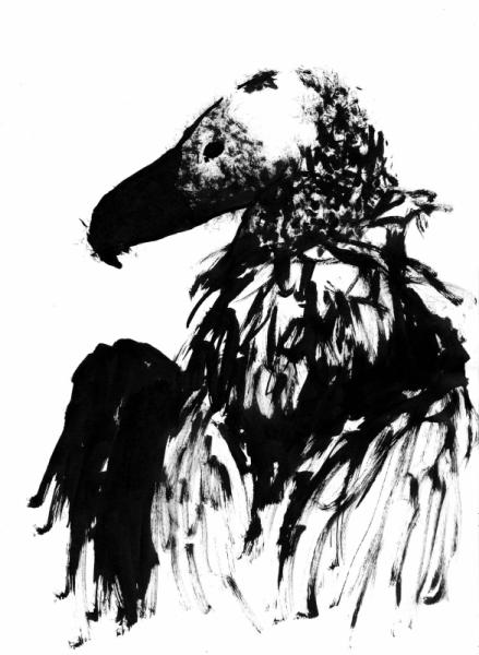 Dessin Vautour Oiseau Savane Afrique Vautour I