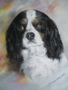 Drawing - chien