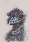 10x8 print Emu bird oil pastel painting Lim ed 2/150 animal portrait art realism