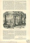 Landscape Paysage Tahiti Océanie France de Charles Giraud GRAVURE OLD PRINT 1859