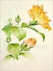 Poster / Toile / Tableau verre acrylique Hibiscus rosa-sinensis - Sarah Creswell